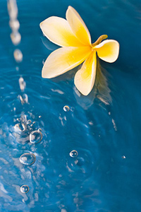 Flower floating in the water
